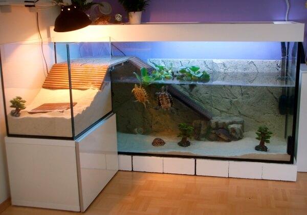 Как правильно обустроить акватеррариум для красноухой черепахи.