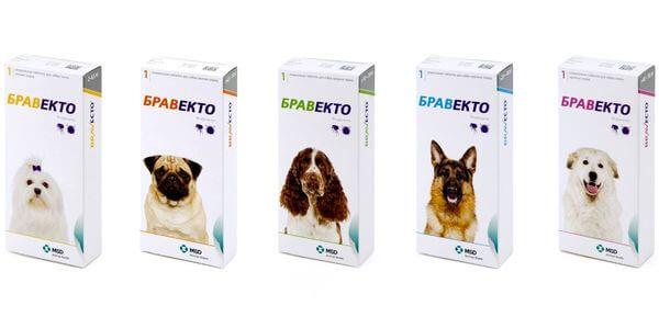 Инсектоакарицидный препарат Бравекто для собак.