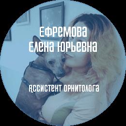 О докторе: Ефремова Елена Юрьевна. Ассистент орнитолога, владелец птиц с многолетним опытом.