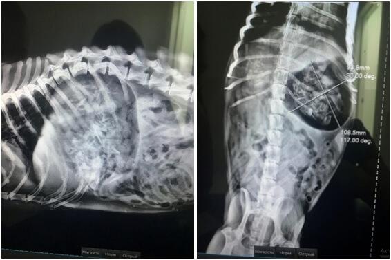 Инородные тела в желудочно-кишечном тракте животных. Рис. 2