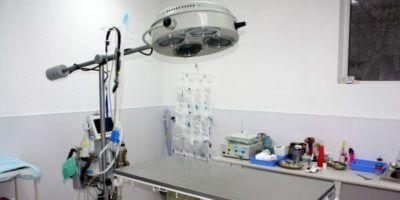 Общая хирургия животных в Санкт-Петербурге. Грыжесечение, удаление параанальных или слюнных желез, лапаротомия, спленэктомия, уретротомия и другие операции.