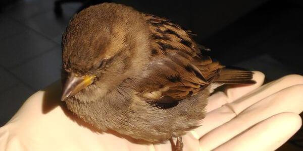 Ветеринарные услуги для птиц