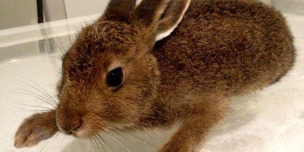Ветеринарные услуги для грызунов и кроликов