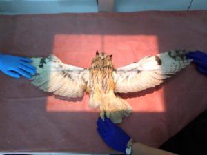 Врач-орнитолог Беломытцева Н. В. рассказывает, зачем нужен рентген птицы, как его правильно проводить и почему рентген птицам нужно делать ежегодно.