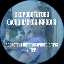 О докторе: Скоробогатова Елена Александровна. Ассистент ветеринарного врача. В настоящий момент является студенткой 4 курса СПбГАВМ.
