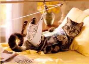 Статья, посвящённая травматизму мелких домашних животных, а именно переломам конечностей. Классификация и способы лечения. Автор: Рогозина Елизавета Игоревна.