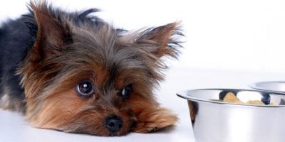 Ветеринарная гастроэнтерология в Санкт-Петербурге. Приём ветеринара-гастроэнтеролога и лечение заболеваний желудочно-кишечного тракта у животных.