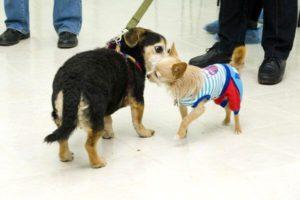 Статья для владельцев животных о том, как подготовиться к посещению ветеринарного врача. Автор статьи: ассистент ветеринарного врача Седова Татьяна Юрьевна.