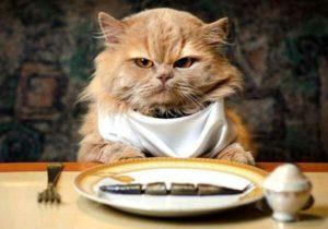 Ветеринарный врач Беломытцева Н. В. рассказывает об общих принципах кормления кошек, типах рационов питания кошек и особенностях чистого кормления и сочетания рационов.
