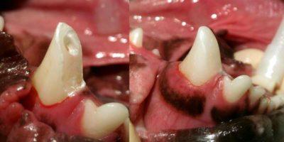 Ветеринарная стоматология в Санкт-Петербурге. Удаление зубов, снятие зубного камня, санация полости рта, реставрация эмали, пломбирование зубов и другие услуги.