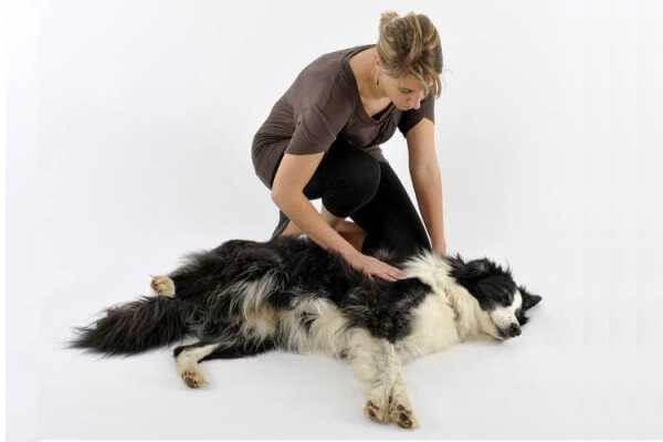 Судороги у животных: что можно сделать перед приёмом врача.